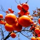감나무님 프로필 사진