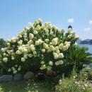 바다풀잎님 프로필 사진