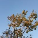 나무님 프로필 이미지